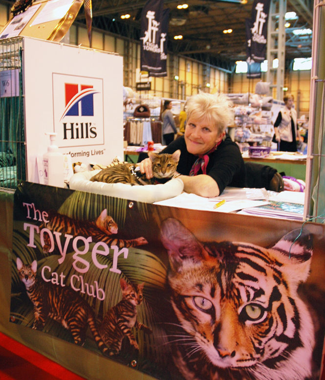 Susan Moreland Tobysden Sir Tegyr kitten Toyger Cat Club stand National Pet Show 2016