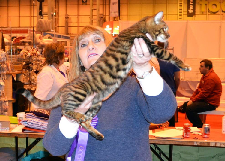 Gill Heaton Mistymogwai Princess Pushka Toyger Cat Club stand National Pet Show 2016